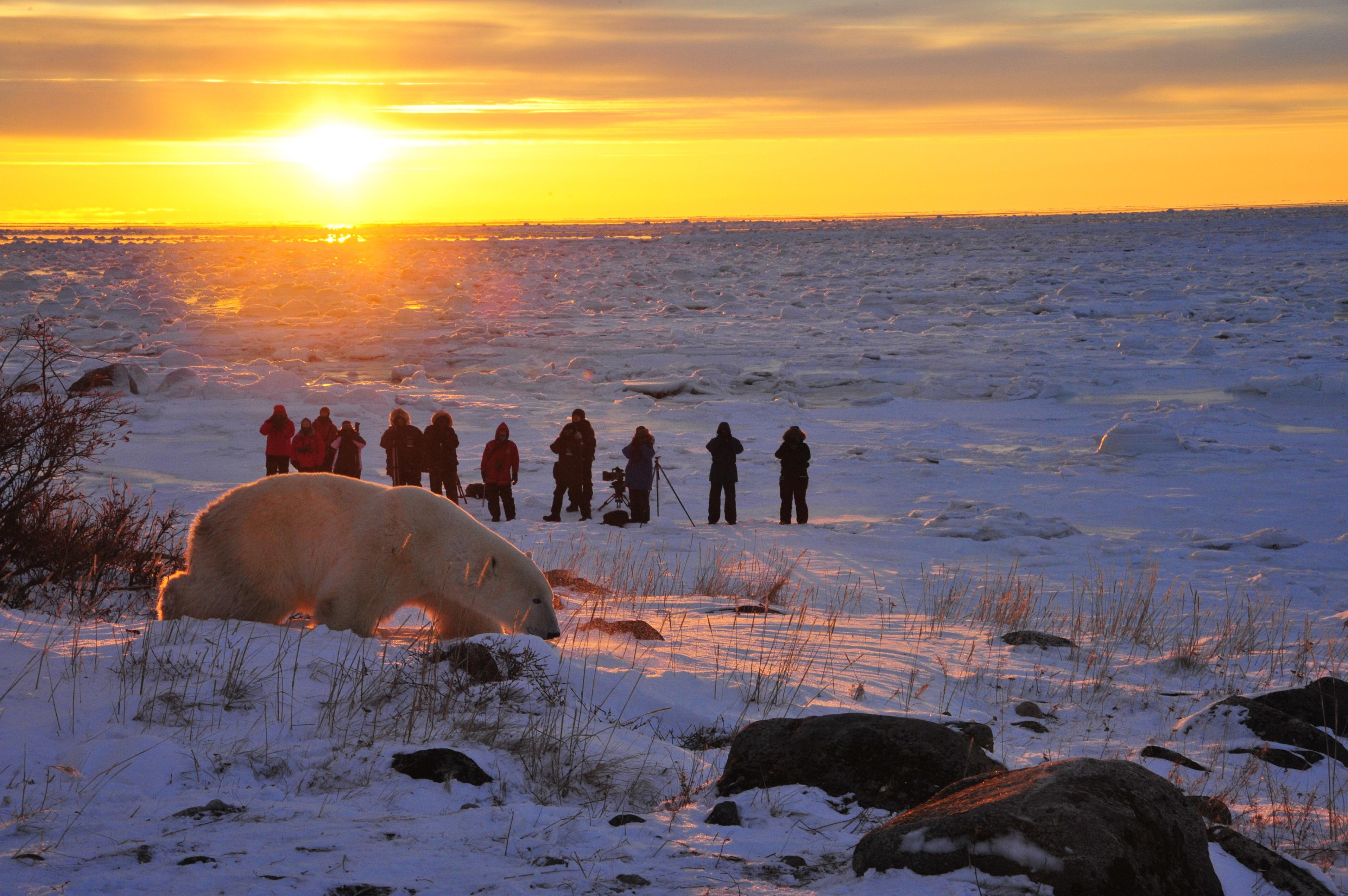 Sunset bear_Courtesy of Churchill Wild, photo by Ian Johnson
