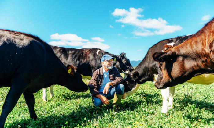 David Gremmels, the president of Rogue Creamery in Oregon. Their dairy cows graze freely on pastures that border the Rogue River. (H. Sterling Cross)