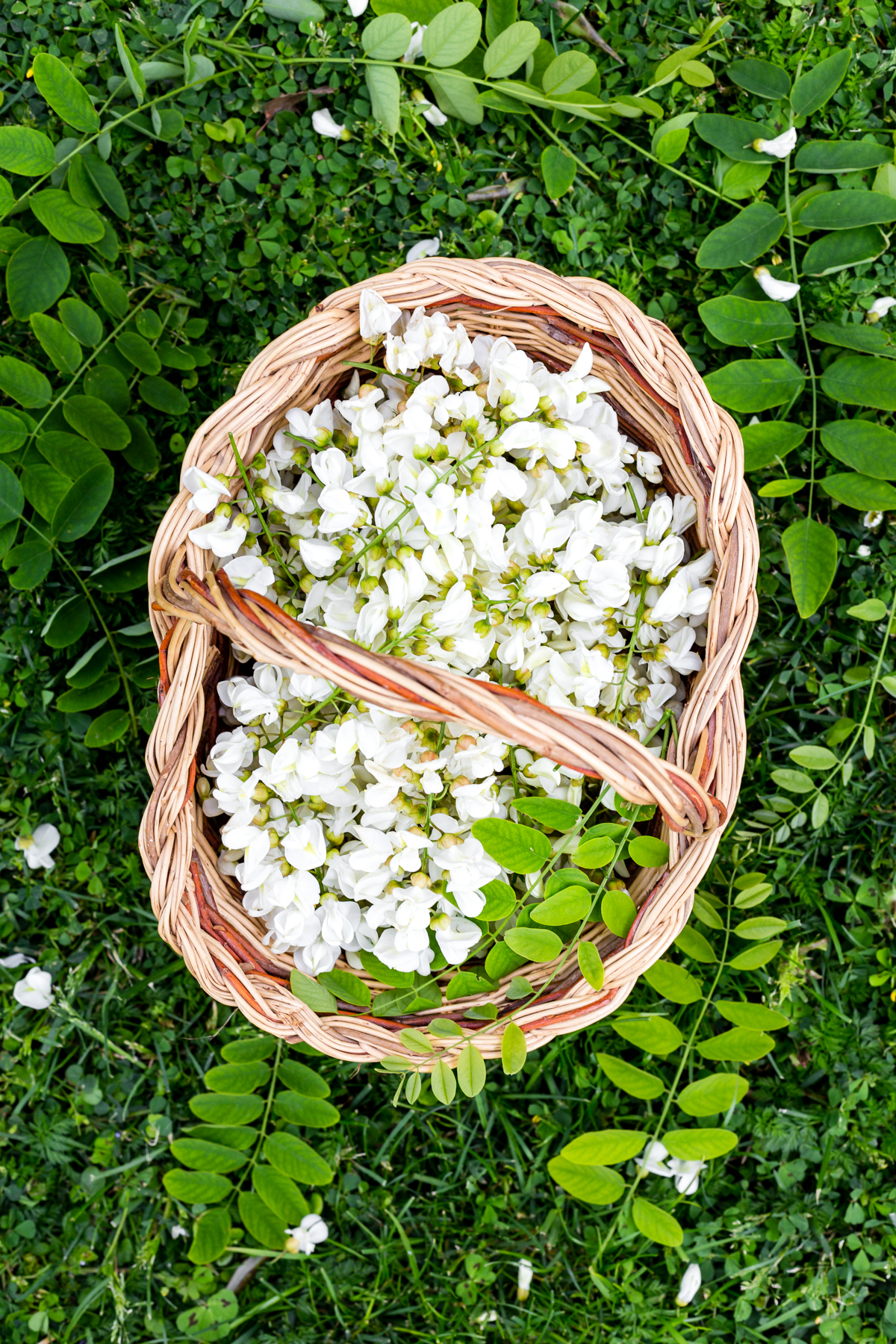 black locust flowers in basket