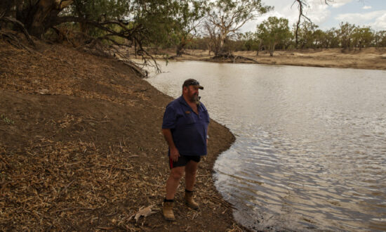 Fish Fatalities in New South Wales' Lake Wyangan Spurs Investigation