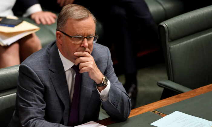 Opposition Leader Anthony Albanese puts questions to the Prime Minister Scott Morrison during Question Time in the House of Representatives in Canberra, Australia on Feb 5. (Tracey Nearmy/Getty Images)