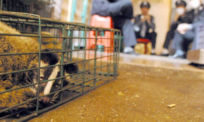 Chinese health workers and police watch over the last remaining civet cats confiscated from a wildlife market in Guangzhou, southern China's Guangdong province on Jan. 6, 2004. (-/AFP via Getty Images)