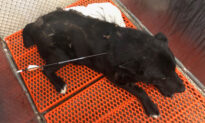 Dog Was Shot in the Neck With an Arrow on Reservation, Gets Rescued, Expected to Recover