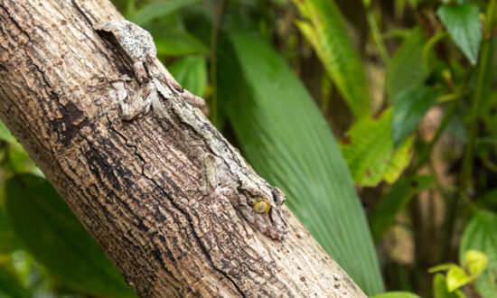 Hard-to-Spot Creatures With Amazing Camouflage: Can You See the Animals Hiding in Their Surroundings?