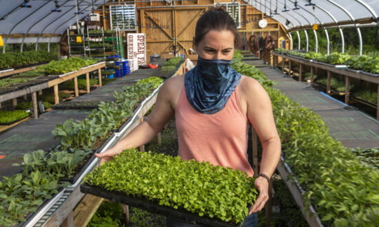 USDA Expands Aid to US Farmers, Specialty Crop Producers