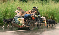 Man Walks Thousands of Miles Collecting Stray Dogs and Finds Homes for Them in Mexico