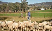 Australia and Saudi Arabia Resume Livestock Trade After 10 Year Hiatus