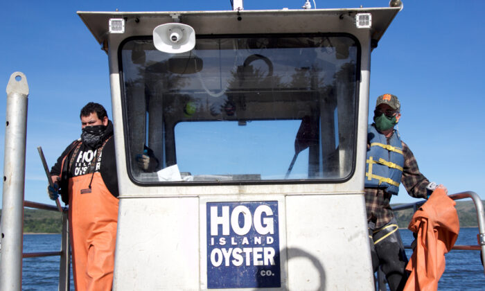 Terry Sawyer (R), co-founder of Hog Island Oyster Co. and Cesar Bernal, farm operations manager, prepare to head out on a boat to one of the company's farm plots on Tomales Bay in Marshall, California. (REUTERS/Nathan Frandino)