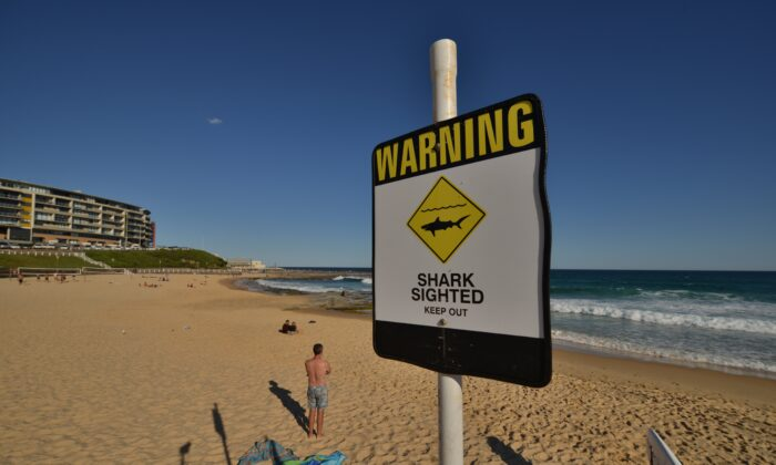 Shark warning sign on the beach in the northern New South Wales, Australia, Jan 17, 2015. (Peter Parks/AFP via Getty Images)