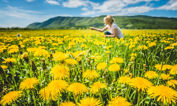 My dandelion war did make me think harder about a question: What if all of us tried to brighten the corner right where we are instead of changing the world? (Benoit Daoust/Shutterstock)