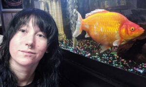 Woman Shocked When Her Small Goldfish Grows Into a Foot-Long Cannibal 'Monster'