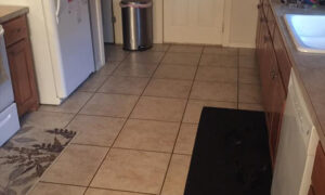'Invisible' Dog Has the Internet Stumped–Can You See the Dog Hiding in the Kitchen?