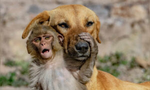 Mother Dog 'Adopts' Orphaned 10-Day-Old Baby Monkey After Its Parents Were Poisoned