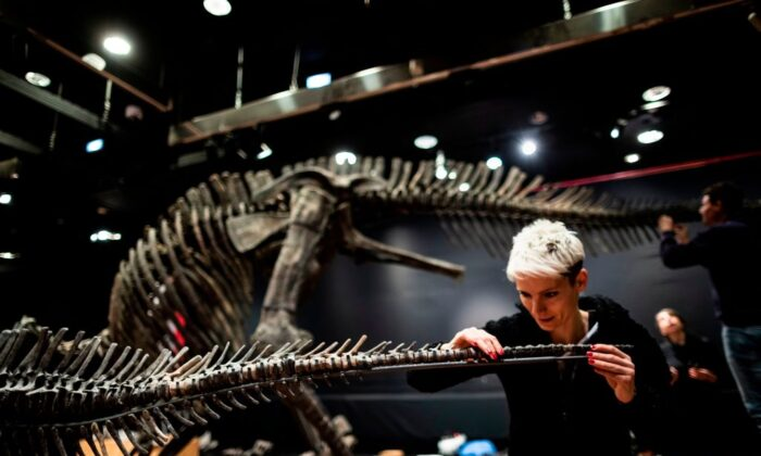 A scientific consultant assembles the bones of a Crested Hypacrosa's skeleton, a Jurassic age (72-70 million years) dinosaur at the Drouot auction house in Paris on April 13, 2019. (KENZO TRIBOUILLARD/ Getty Images)