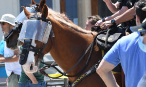 Ohio Animal Hospital Offers to Treat Police Horses Injured During Protests Free of Charge