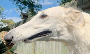 2-Year-Old Dog Has an Incredible 12.2-Inch Nose Believed to Be the World's Longest