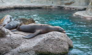 Marine Zoo Forced to Close Says It May Have to Euthanize Hundreds of Animals If Not Rehomed