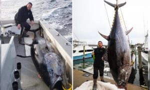 Virginia Angler Reels In Massive 9-Foot-Long Tuna, Weighing 700 Pounds, Setting State Record