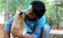 Life-Changing Rescue Of Unconscious Street Dog