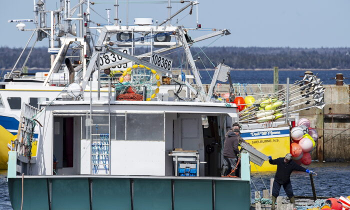 Fishermen unload lobster crates in Newellton, N.S., on March 25, 2020. (Andrew Vaughan/The Canadian Press)