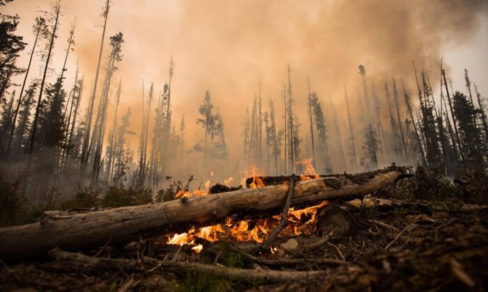 A wildfire burns on a logging road approximately 20 km southwest of Fort St. James, B.C., on Aug. 15, 2018. (THE CANADIAN PRESS/Darryl Dyck)