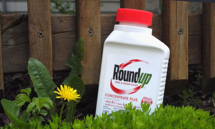 Roundup weed killer is shown in Chicago, Ill., on May 14, 2019. (Scott Olson/Getty Images)
