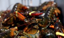US Moves to Protect Lobster Industry, Threatens Tariffs on China