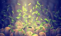 Innovative New Method May Allow Doctors to Target 'Bad' Gut Microbes