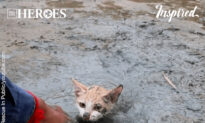 Amazing Rescue Of a Kitten Stuck In Mud