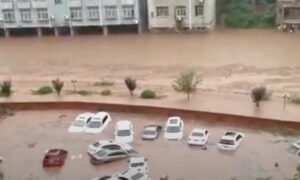 Flooding in Chongqing and Wuhan Uprooted Huge Trees