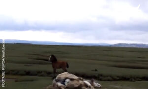 Little Foal Doesn't Leave Immobile Mama Horse Alone