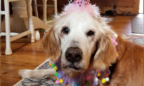 World's Oldest Living Golden Retriever Celebrates 20th Birthday With Cake and Family