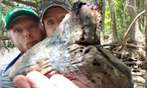 Fossil Hunter Discovers MASSIVE Megalodon Shark Tooth in a Riverbank in South Carolina
