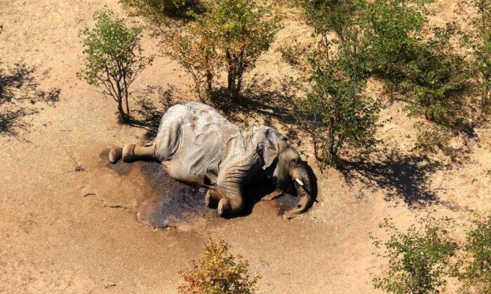 A dead elephant is seen in this undated handout image in Okavango Delta, Botswana, May-June, 2020. (Handout via Reuters)
