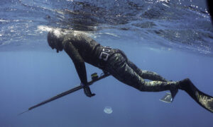 Shark Kills Spearfisherman Off Queensland Island