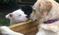 Next-Door Dogs Fall in Love With Each Other: 'They Are Inseparable When They Are Together'