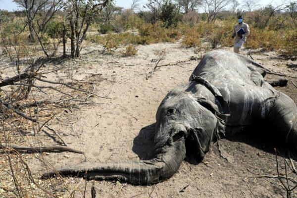 BOTSWANA-ELEPHANTS