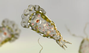 Rare Brain-Eating Amoeba Infects Person in Florida, Prompts Health Officials to Issue Warning