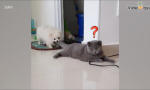 Funny Moments Of Dogs and Cats