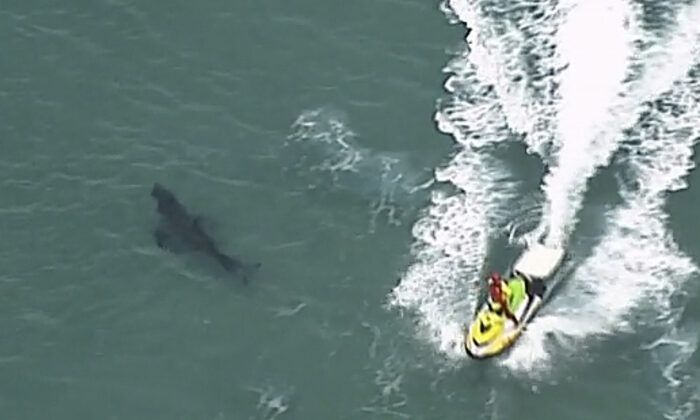 A jet ski passes over a shark swimming along the coast of Kingscliff, New South Whales, Australia, on June 7, 2020. (ABC/CH7/CH9 via AP)