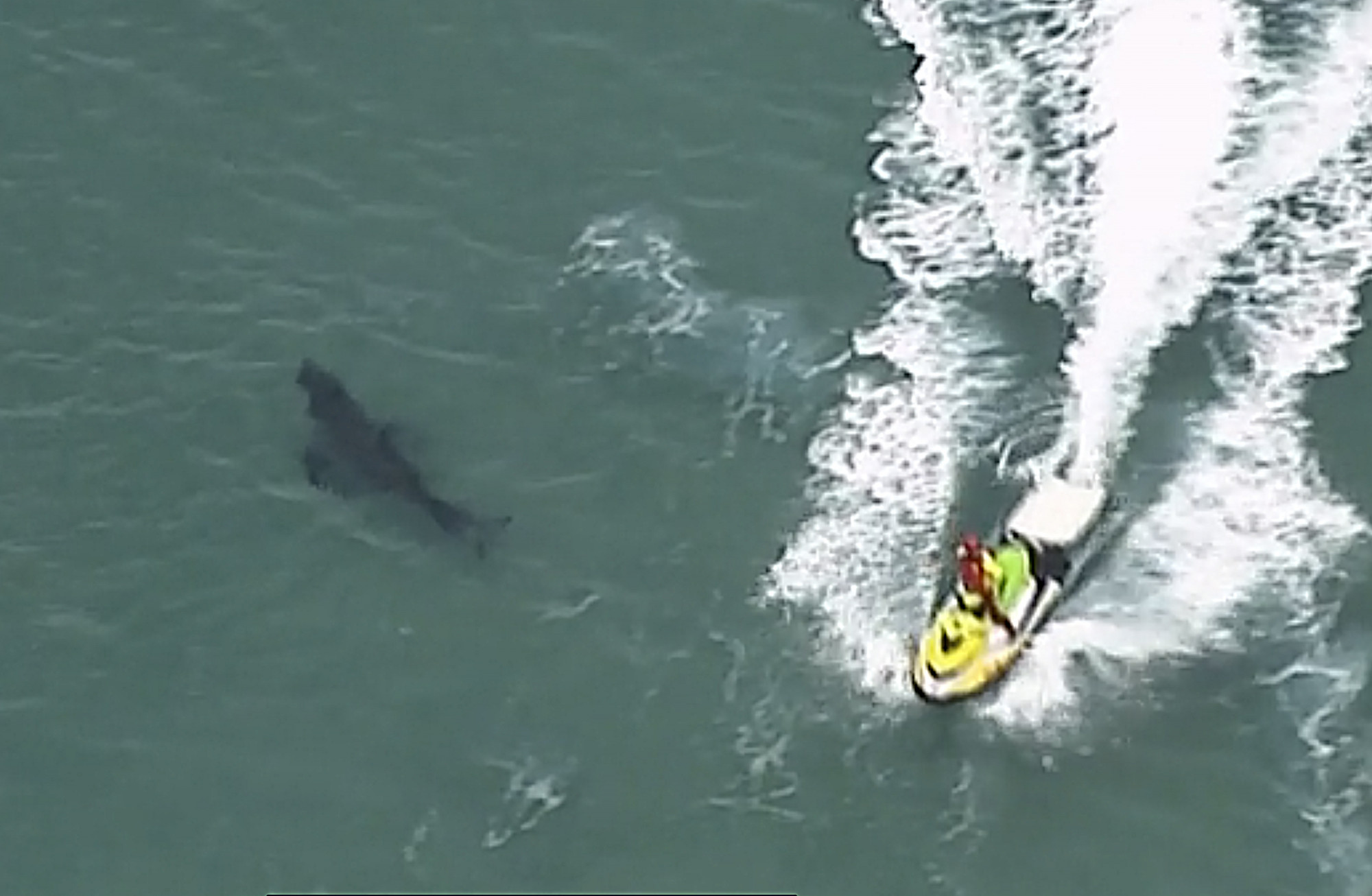 A jet ski passes over a shark