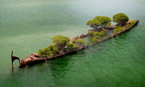 157-Year-Old Shipwreck Hull in Australia Transforms Into 'Floating Forest' With Mangrove Trees
