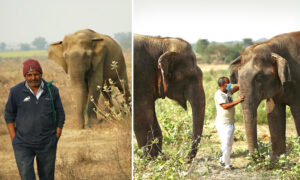 Dedicated Elephant Caregiver for 11 Years Shares He Cherishes Taking Care of These Animals