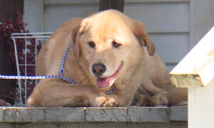Kansas Dog That Went Missing for Days Ends Up at Its Old Home 57 Miles Away in Another State