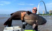 'I've Got a Monster': St Louis Fisherman Reels In HUGE 112lb Catfish in Mississippi River