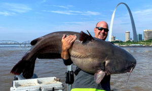 'I've Got a Monster': St Louis Fisherman Reels In HUGE 112lb Catfish in Mississippi River