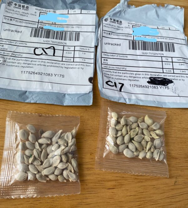 package china seeds