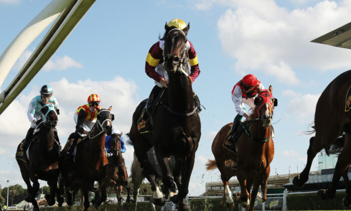 Horses pass the post at Royal Randwick Racecourse in Sydney on June 6, 2020. (Matt King/Getty Images)