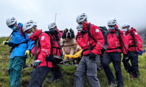 Ailing 121-Pound St. Bernard Dog Rescued From England's Tallest Mountain