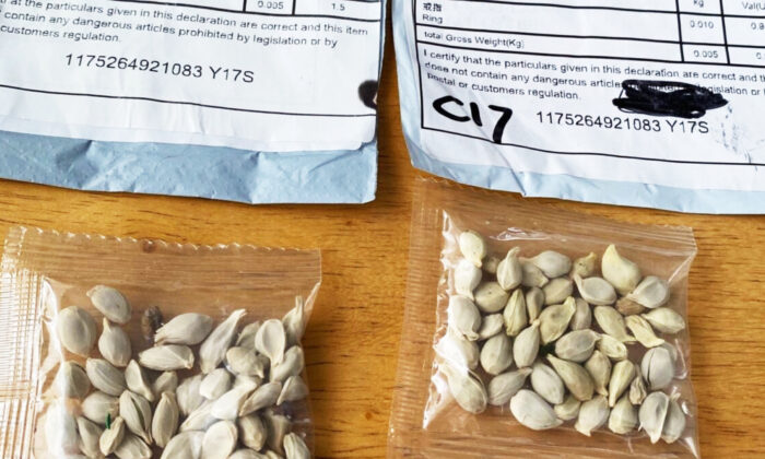 Two packages containing unknown seeds from China. (Washington State Department of Agriculture)